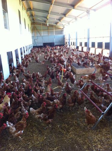 farm-010